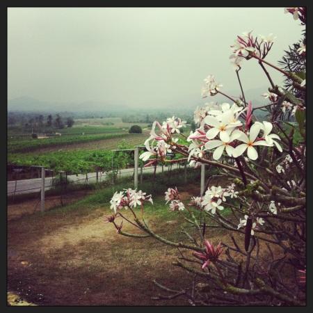 Hua Hin Hills